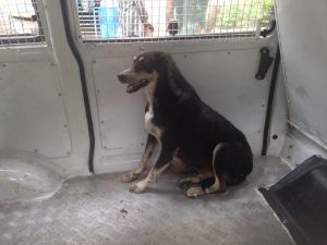 Bhavesh sheth's Kaalu goest to SPCA-9-6-2014 (3)