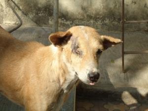 injured dog rescued (800x600)